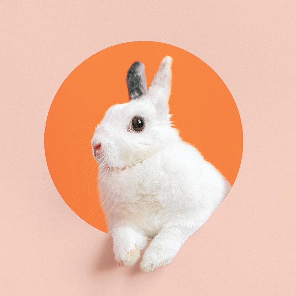 konijnenyoga (2)